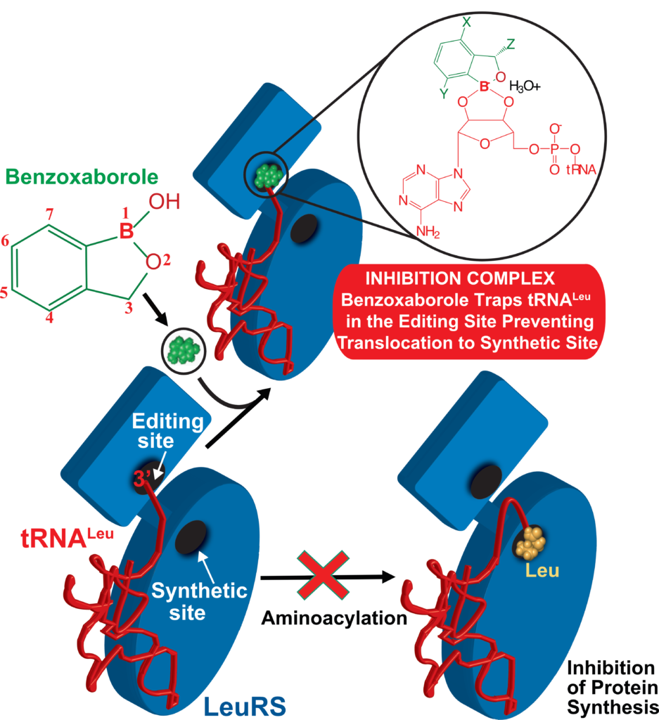 Palencia's Group. Inhibition mechanism LeuRS