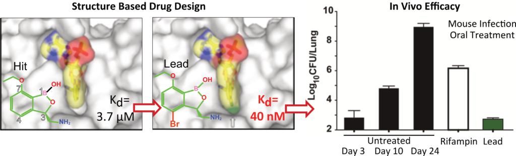 Palencia's Group. Structure-Based Drug Design